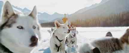 Drive-your-own-sled-of-dogs-on-a-dogsledding-adventure-at-Spray-Lakes