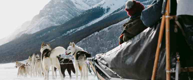 Drive-your-own-team-of-dogs-on-a-dogsled-tour-at-Spray-Lakes