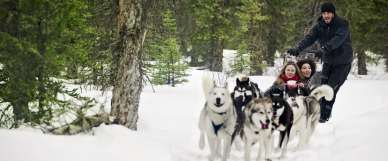 Snowy-Owl-Dogsled-Tour